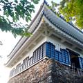 写真: 岐阜城 No - 17:真下から見上げた岐阜城