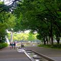 写真: 青々とした木々が生い茂る白川公園 - 2