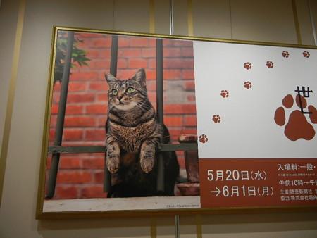 岩合光昭の世界ネコ歩き 写真展