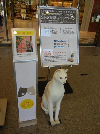 岩合光昭の世界ネコ歩き 写真展 招き猫?