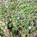 Photos: flower03112012dp2