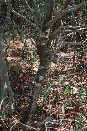 tree03142012dp2-01