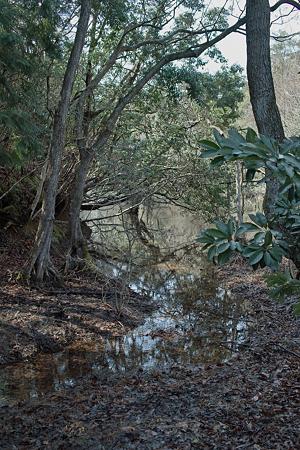 swamp03142012dp2