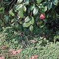 flower03262012dp2-03