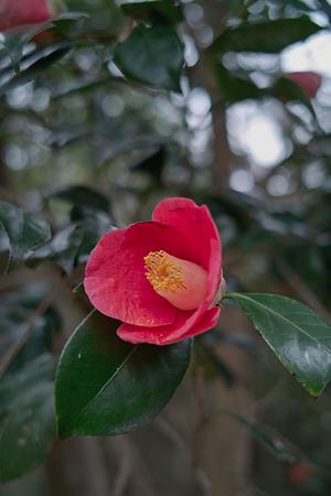 Flower04092012dp2-03