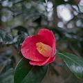 Photos: Flower04092012dp2-03