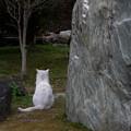 石 猫 石
