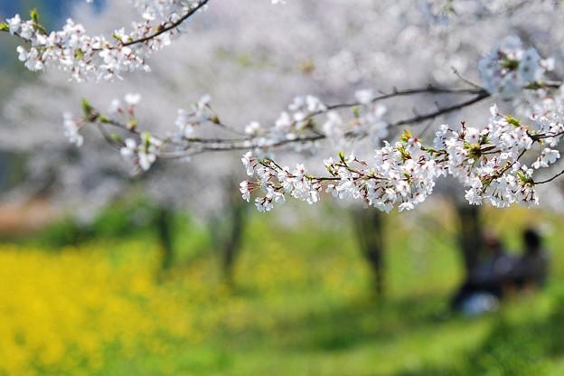 Photos: 里山のお花見
