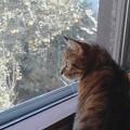 写真: 猫と庭の夏蜜柑