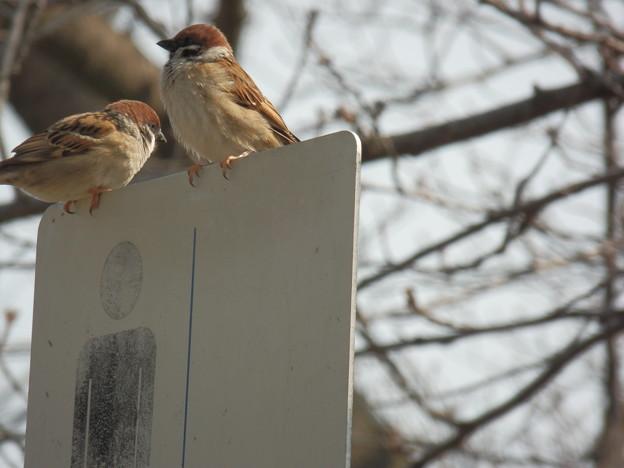 春の鳥撮り?