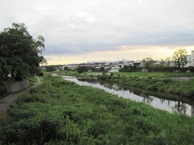 今日の高野川