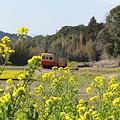 春~小湊鉄道~3