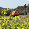 春~小湊鉄道~8