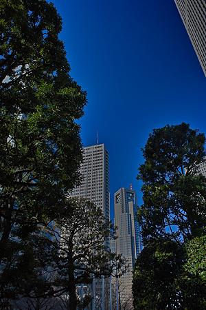 樹と摩天楼SDIM0088