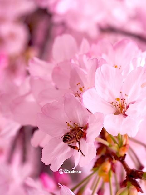 Dance of a bee3