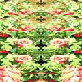 Photos: 薔薇の言葉a
