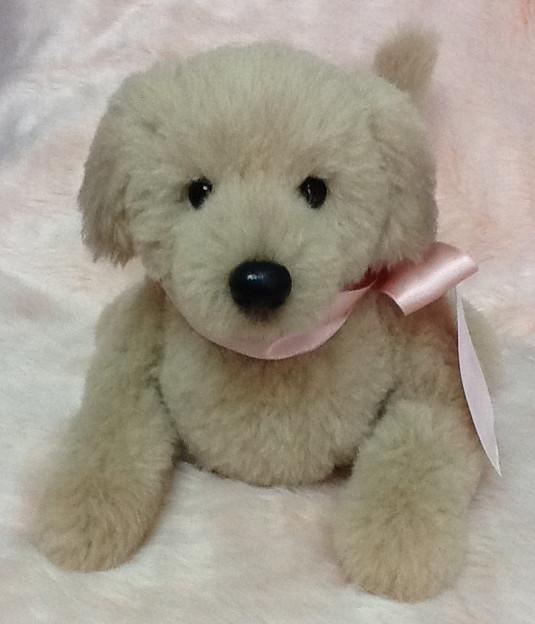 """Teddy Dog""""Mint"""""""
