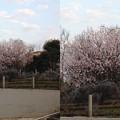写真: 春の花3