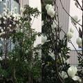 写真: 春の花4