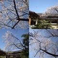 写真: 熱田神宮