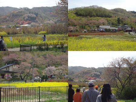 花見山公園道