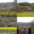 写真: 花見山公園道