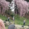 写真: 合戦場の桜コンサート