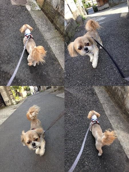 写真: 5月22日朝散歩