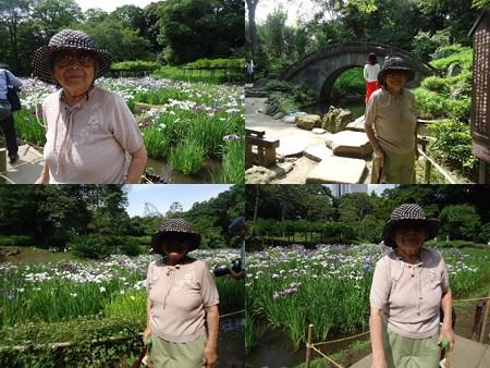 小石川後楽園花菖蒲と母