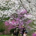 杉村公園桜04