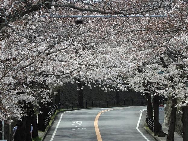 桜トンネル~逗子市桜山