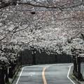 写真: 桜トンネル~逗子市桜山
