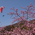 天空のお花見