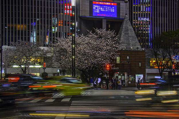 夜桜・数寄屋橋II