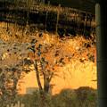 Photos: 夕日に染まる