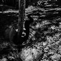 Photos: 樹影II