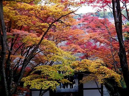京都 300