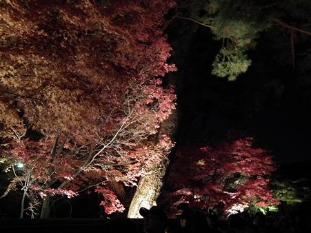 京都 815