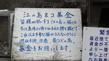 江の島ネコ募金看板