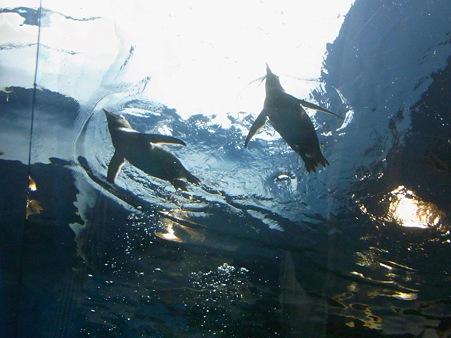 20110815 海響館 亜南極水槽05