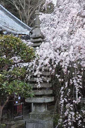 石塔と枝垂桜