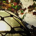 浮と蔦の風景