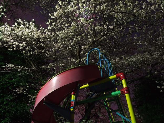 夜桜と小さな展望台