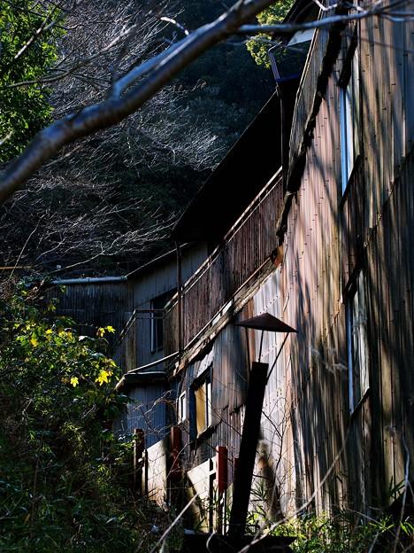 裏山の木漏れ日