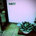 Photos: 2477