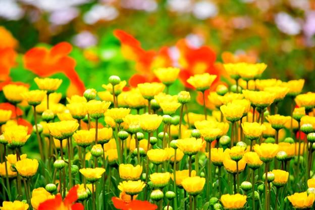 春の競演3