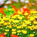 Photos: 春の競演3
