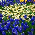Photos: 春の競演4