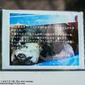 Photos: futami150418004