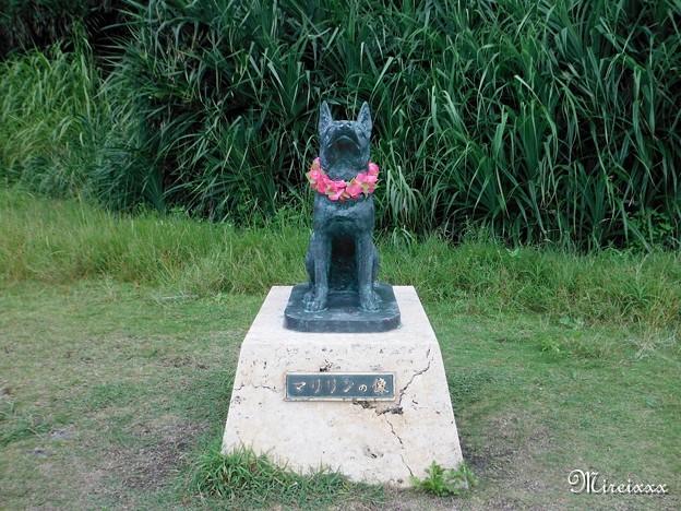 夏の慶良間諸島2012